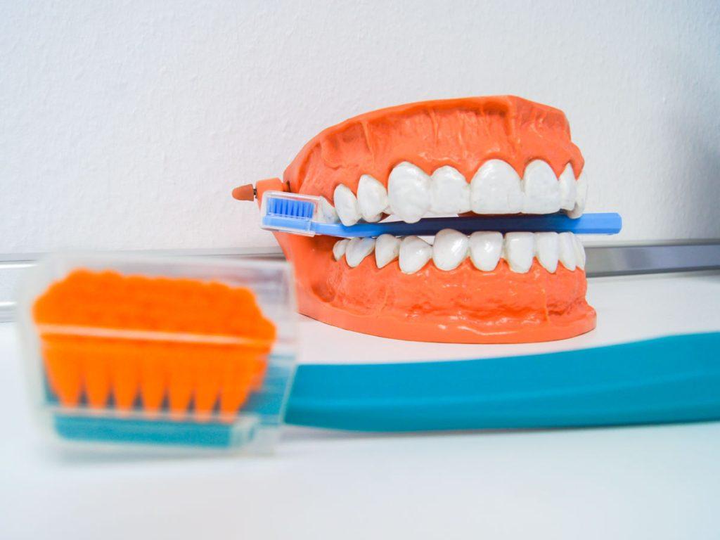 Professionelle Zahnreinigung (PRZ) in der Zahnarztpraxis Haun Herzebrock-Clarholz